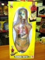Edu Toys Анатомия человеческого тела, MK050(05001)